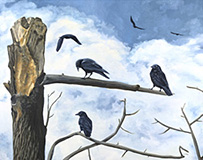 The Crows of Marymoor